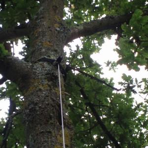 Fixation voile d'ombrage à un arbre 44